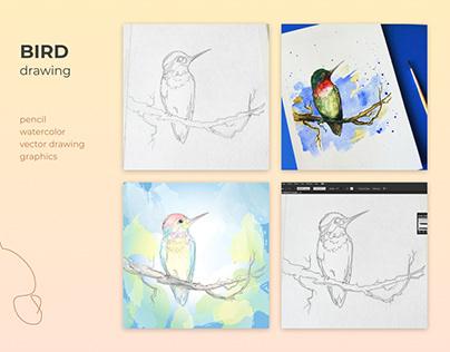 Bird Drawing. Bird Illustration. Graphic Design, Vector
