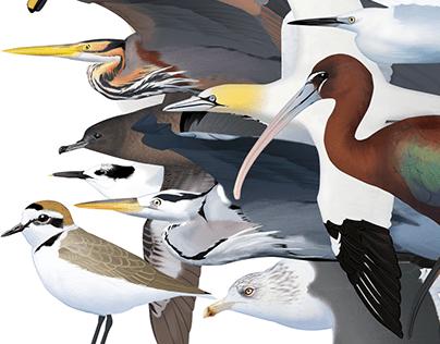 Birds from around Lisbon