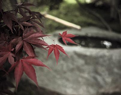 Seiwa-en, Peace and Harmony
