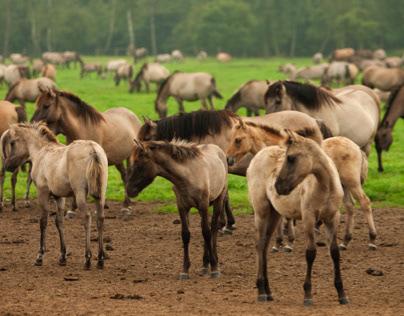 wildhorse foal party