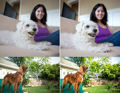 Pet Photography Editing and Retouching Services