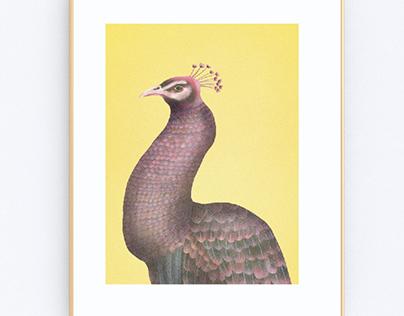 Friday peacock 🦚