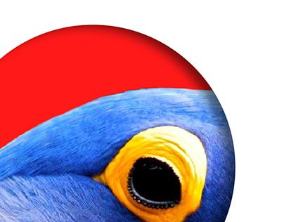 Guacamaya blue