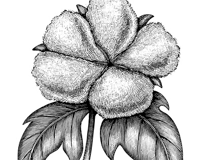 Botanical Scratchboard Engravings by Steven Noble