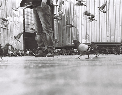 The Bird Stories of Istanbul