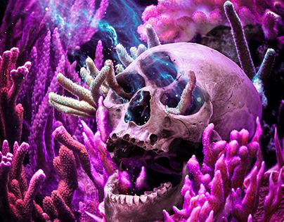 Skull Series #22-31