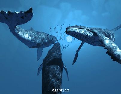 ZDF – Universum der Ozeane