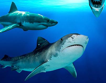 Shark Montage