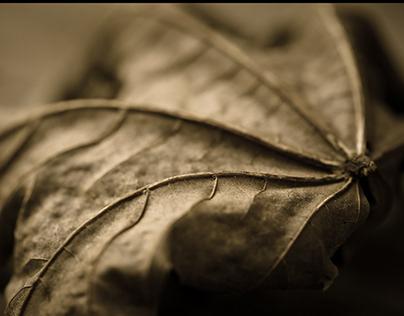 Saturday Leaf