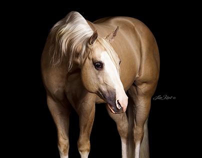 Stallion Photography