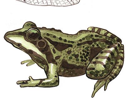 natural history illustration 1