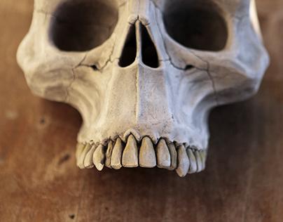 The Missing Link Skull