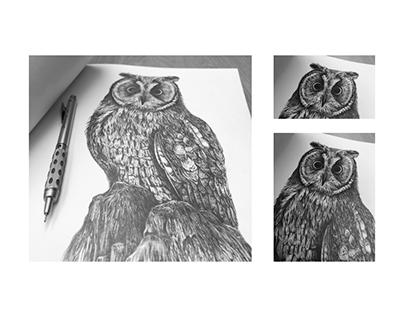 Long Eared Owl - Pencil Illustration