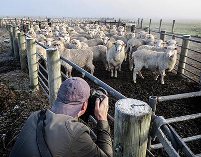 New Zealand Sheep Farm - Vol-1