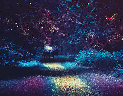 Forest of Infrared Dreams