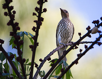 Visiting Backyard Birds