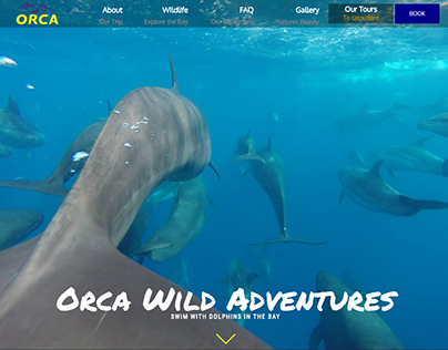 Orca Wild Adventures: A Freelance Project [Case Study]