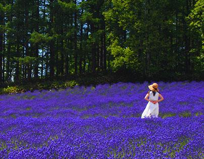 Lavender (A Trip to Sapporo) | Globetrotter