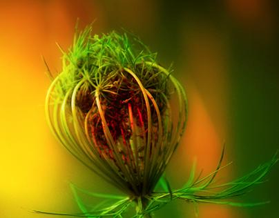 Photo Nature Study