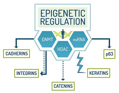 Epigenetics - Medical Graphics