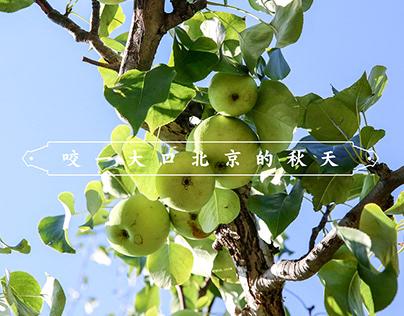 军庄京白梨品牌全案