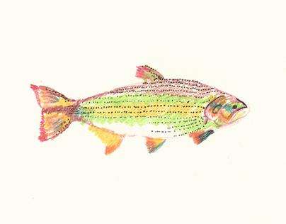 Peixes desenho
