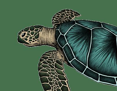 Sea Life animals illustration series