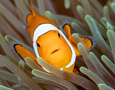 Underwater Biodiversity in Indonesia