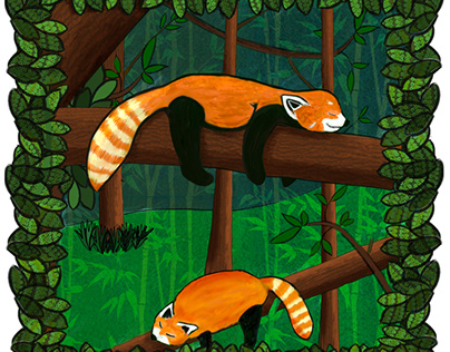 Red Pandas Sleeping on Tree Branches