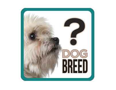 Free App Trivia Game - Guess the dog breed
