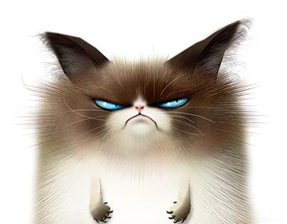 Grumpy Cat?