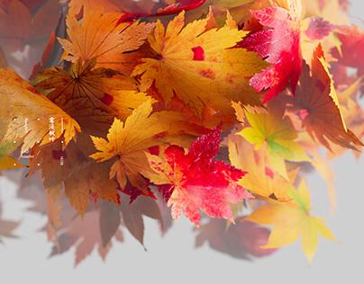 雾浸枫叶/Fog leaching maple leaf