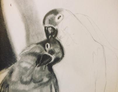 Working on birds in progress