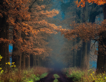 Forest misty paths I