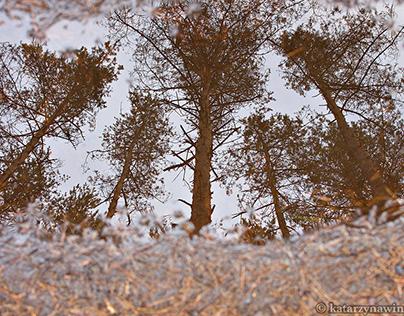 Odbicia/ Reflections