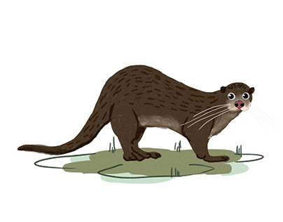 Otters of India