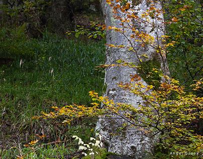 Angel Gruev - Autumn season