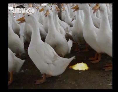 """Sun Snack """"Beijing Duck - Case Study"""""""