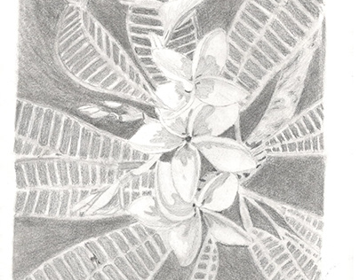 A4 Drawings Visual Diary #2
