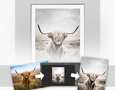 Scottish Highland Cow Scandinavian design style