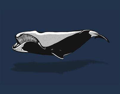 whaletrips.org — Identity, UX|UI