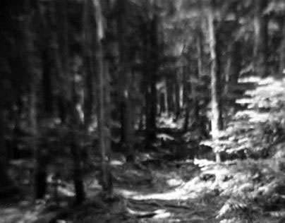 Another Walk In The Woods 2008