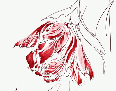 Abstract Prints