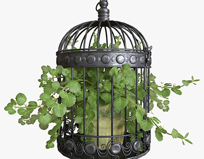 3d model ivy in a bird cage.