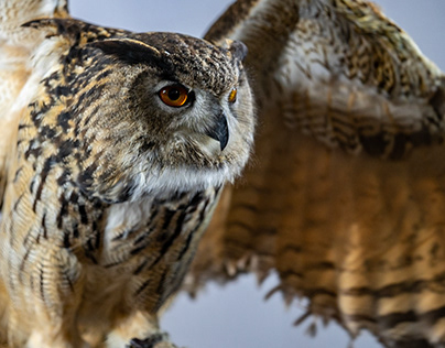 Owl Photo Expo 2017.