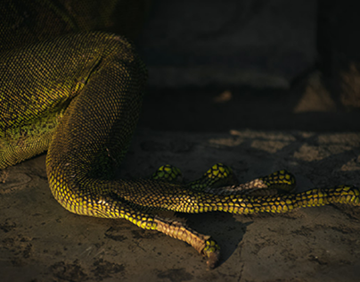 Iguanas del Parque Seminario Guayaquil