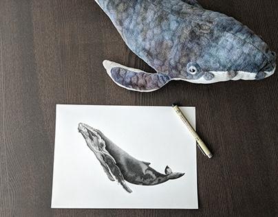 Illustration • Baleine