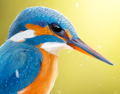 Painting bird