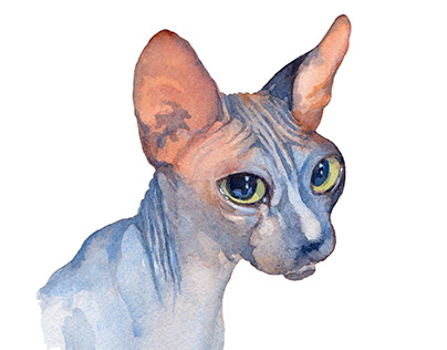 Canadian Blue Sphynx Cat
