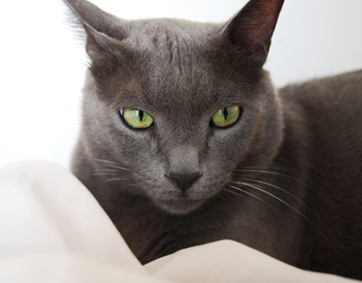 ِA cat life : Ziko